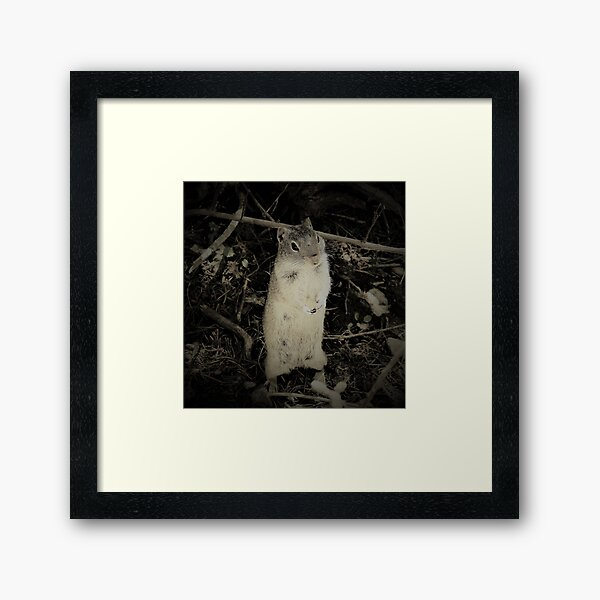 Young Forager Framed Art Print