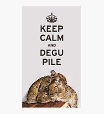 Keep Calm and Degu Pile Photographic Print
