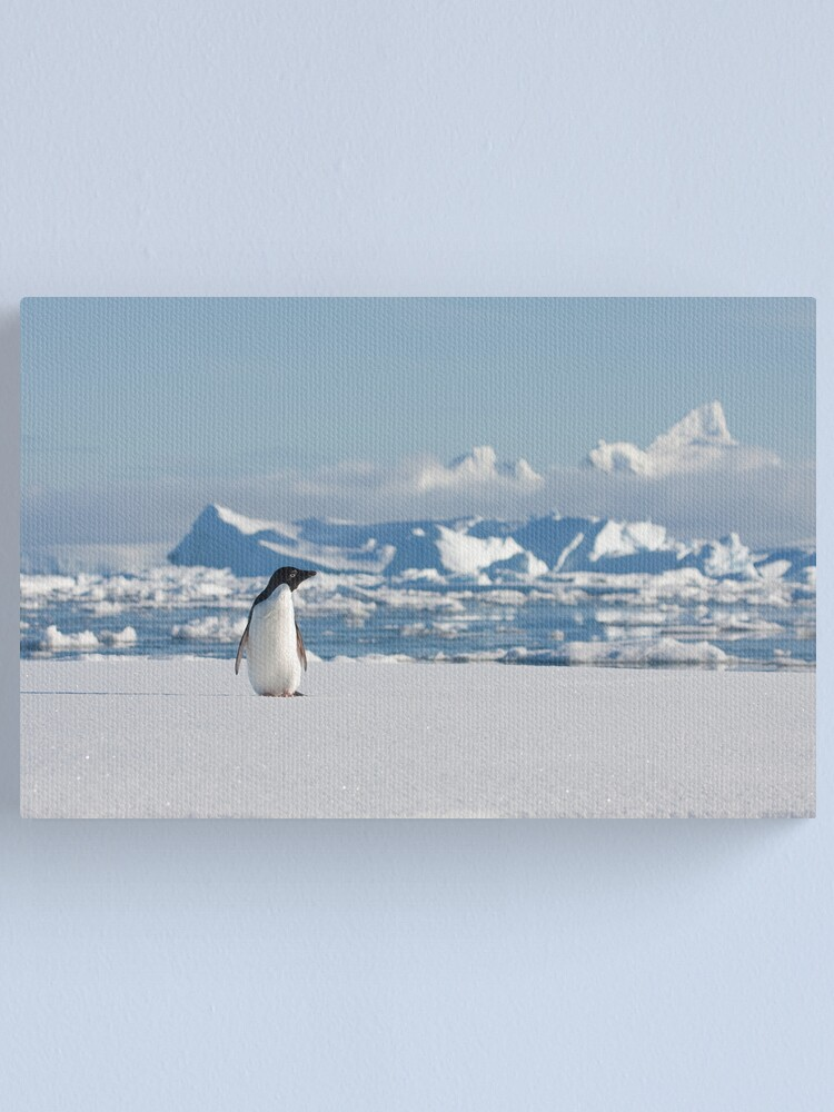 Alternate view of Adelie on Ice Canvas Print