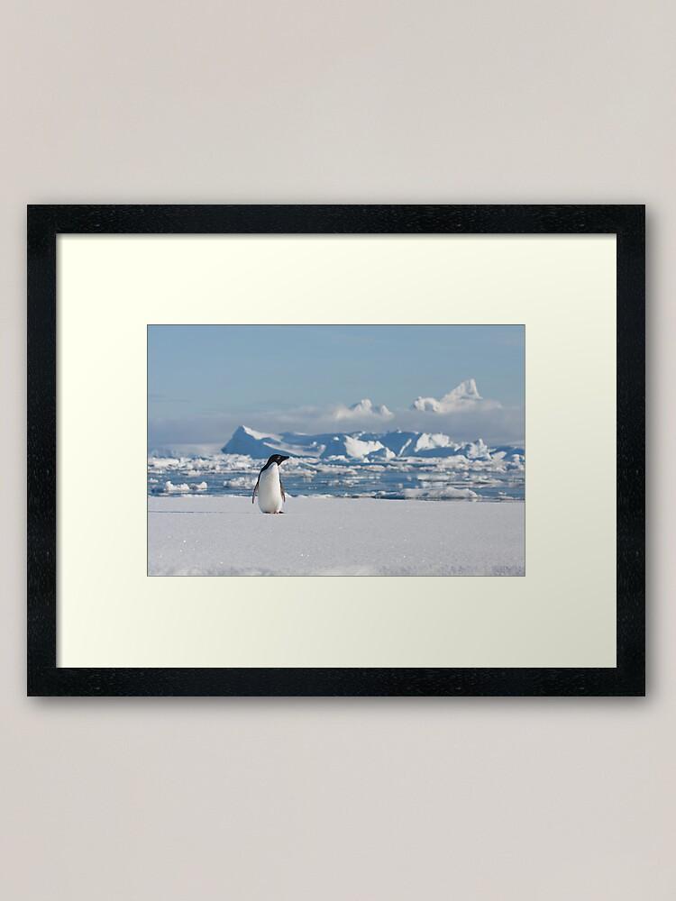Alternate view of Adelie on Ice Framed Art Print