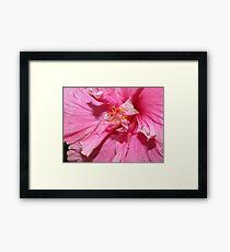 Pink Lace Framed Print