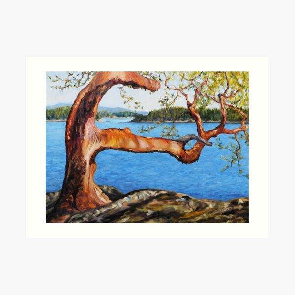 Arbutus Tree Reaching Art Print