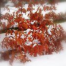 A Little Fall in Winter by Larry Llewellyn