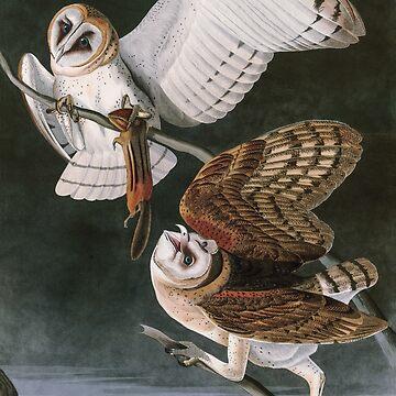 Barn Owls, the Birds of America by John James Audubon by VintageArchive