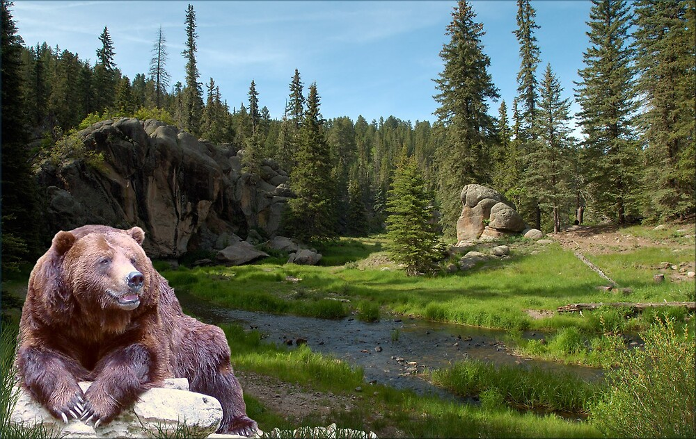 1121-Bear Country Creek by George W Banks