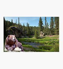 1121-Bear Country Creek Photographic Print