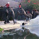 Thai Elephants - 'throw the log' by Bev Pascoe