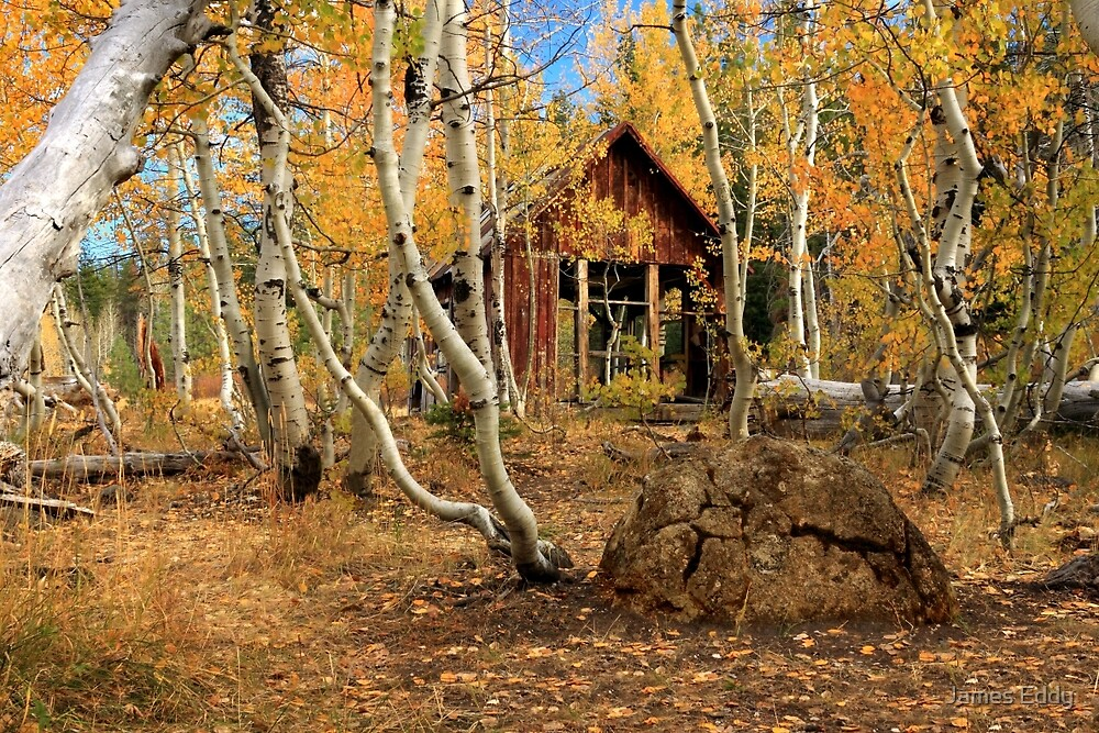 Old Cabin In The Aspens by James Eddy
