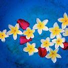 « Flowers of Laos » par Philippe Sainte-Laudy