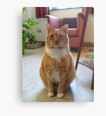 Picture Puurfect Metal Print