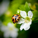 Ladybug... by Janine  Hewlett