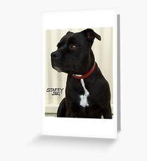 Staffy Dog Greeting Card