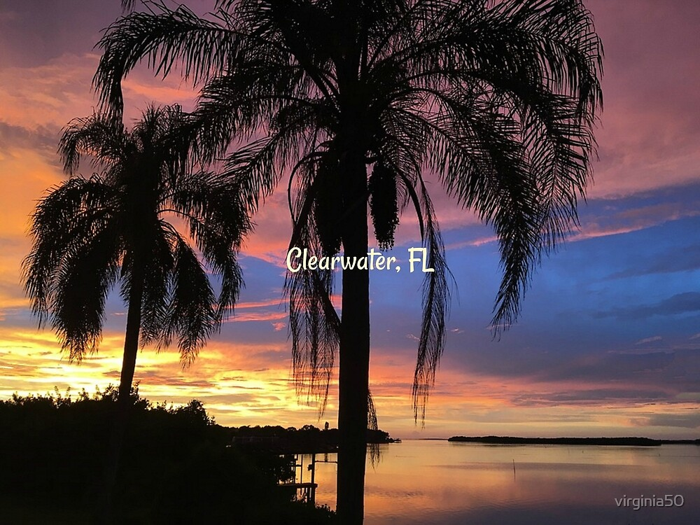 Clearwater, Florida tropical landscape photograph by virginia50