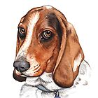 Sulu the basset hound by Danelle Malan