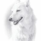 Alaskan white husky drawing by Mike Theuer
