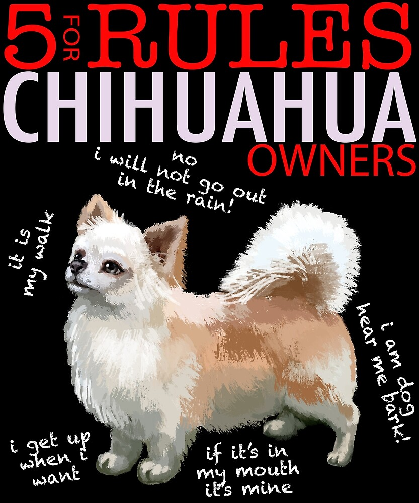 5 Rules for Chihuahua Owners by MichaelRellov