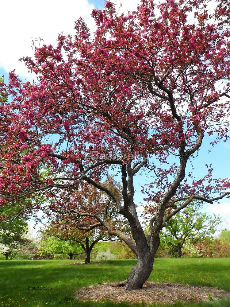 Blooming Tree by Barberelli