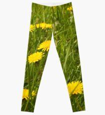 Dandelion in the grass Leggings