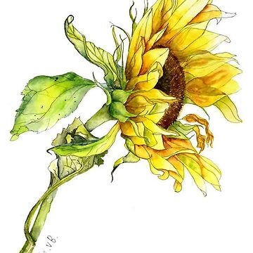 Sunflower watercolour painting by esvb