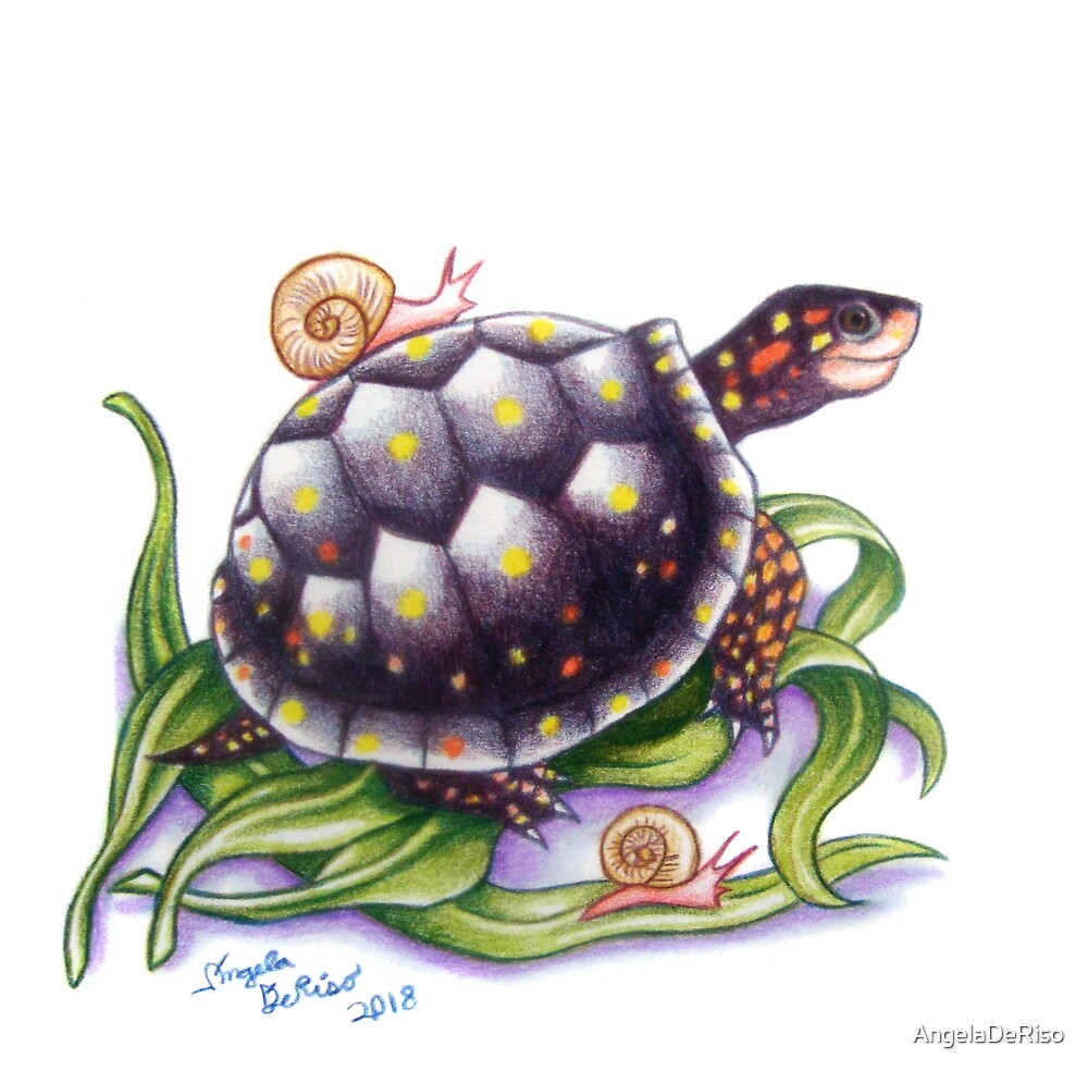 Spotted Turtle With Snails by AngelaDeRiso