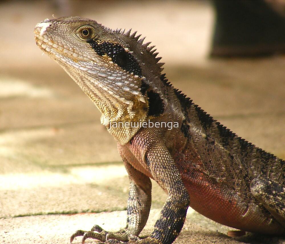 Backyard Water Dragon by janewiebenga