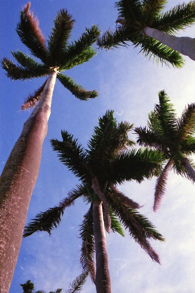 Bermuda Palms by RenaudMartini