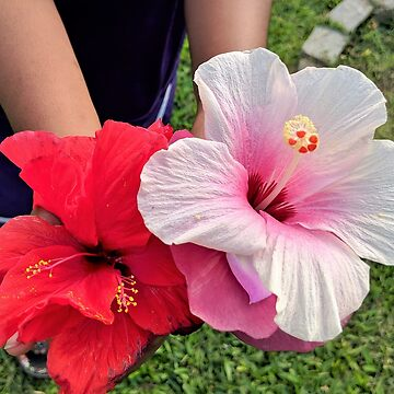 Hibiscus Child by DaleyBlooms