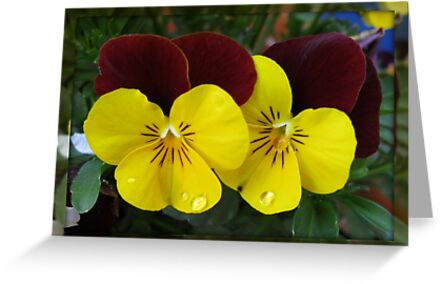 A Flower's Tears - Pretty Violas in Mirrored Frame by BlueMoonRose