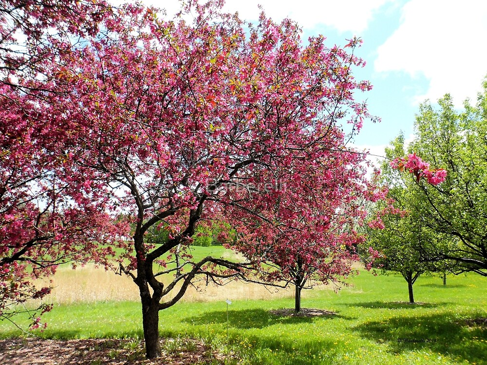 Blooming Crabapple Tree by Barberelli