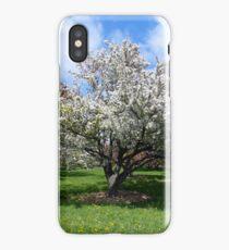 Blooming White Crabapple Tree in Springtime iPhone Case/Skin