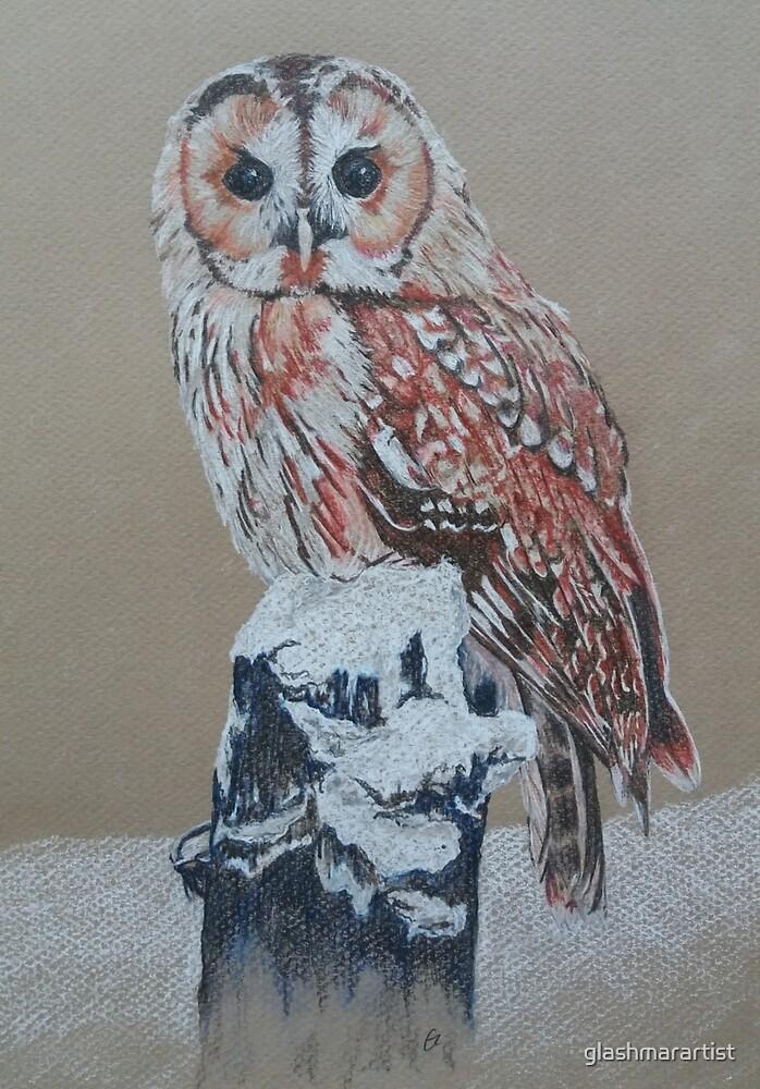 Tawny Owl by glashmarartist