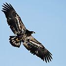 Eagle by Paul Clarke
