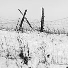 Snowy Fence by denise romano