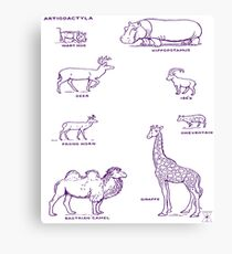 Zoology Animal Chart | Natural History Illustrations Canvas Print