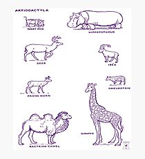 Zoology Animal Chart | Natural History Illustrations Photographic Print