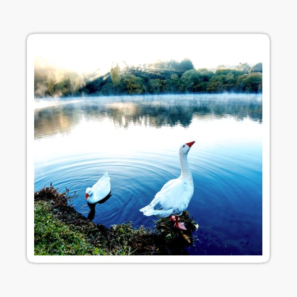 The Goose Crows At Dawn Sticker