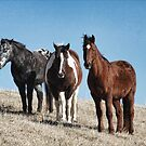 Three Horses On The Hill by denise romano