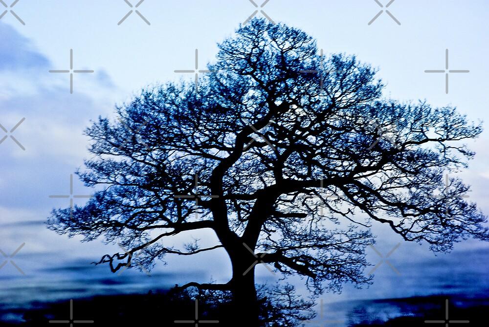 Tree by Catherine Hamilton-Veal  ©