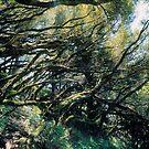 dipsea sticks by simeon schatz