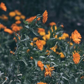 Orange Flower Field by StasiaMonster