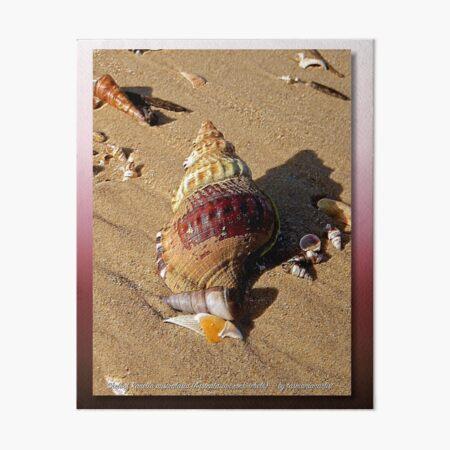 GALERIEBORD ~ Shell of Ranella by tasmanianartist Art Board Print