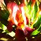 Avatar-Iris - Gorgeous flower Cards*