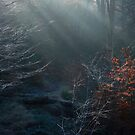 frosted magic by BettinaSchwarz