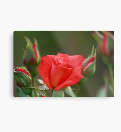 tender loving bloom Metal Print