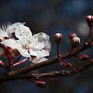 ... new life of spring ... by BettinaSchwarz