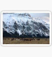 Elk Herd at Waterton Sticker