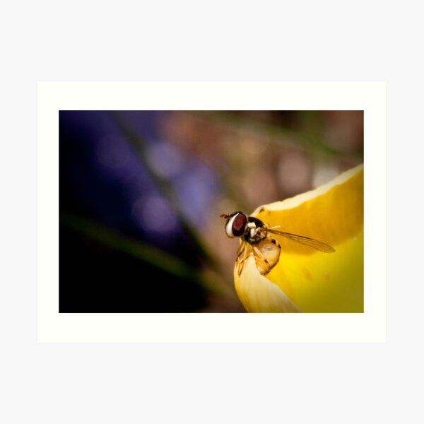 Vigilant Bee Art Print