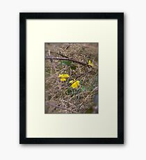 Blooming in a tough environment  Framed Print