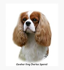 Cavalier King Charles Spaniel Photographic Print