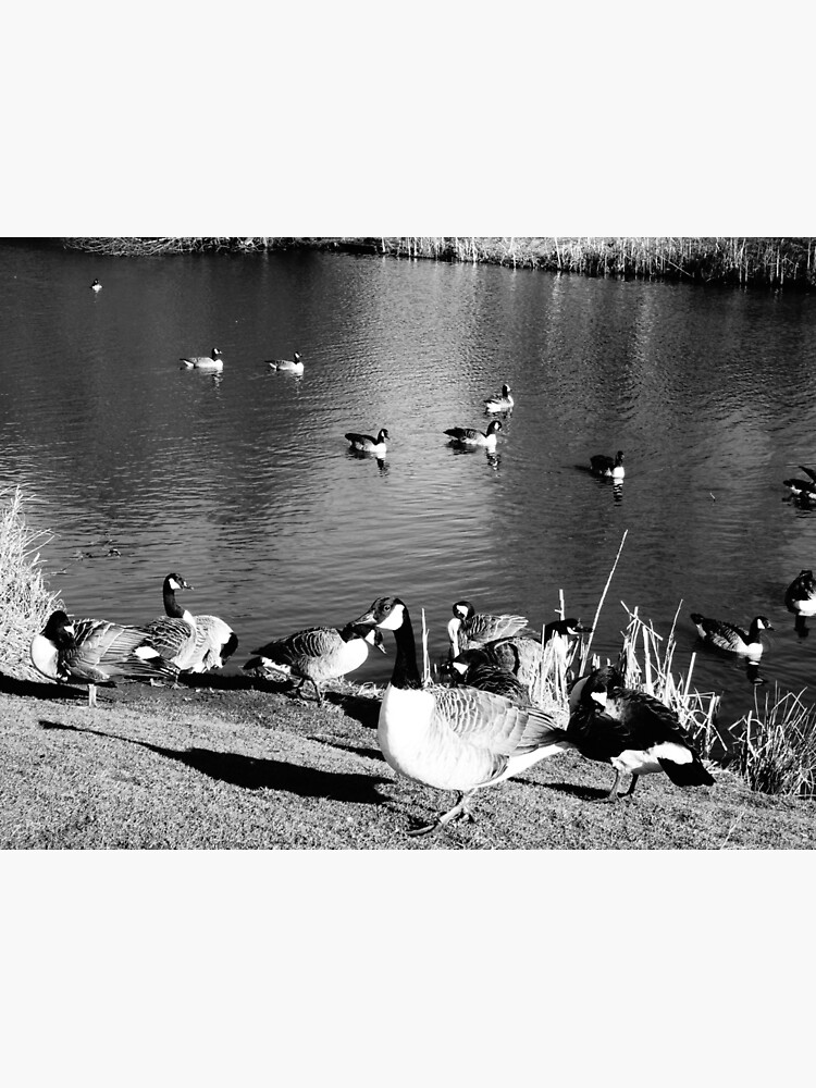 When ducks keep staring at you by santoshputhran
